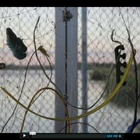 http://player.vimeo.com/video/31926138?title=0&byline=0&portrait=0&color=cdfde5