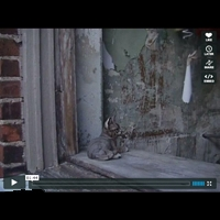 http://player.vimeo.com/video/6973812?title=0&byline=0&portrait=0&color=cdfde5